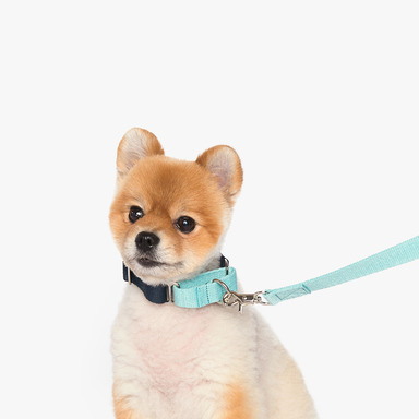 Martingale Collar (Mint/Navy)