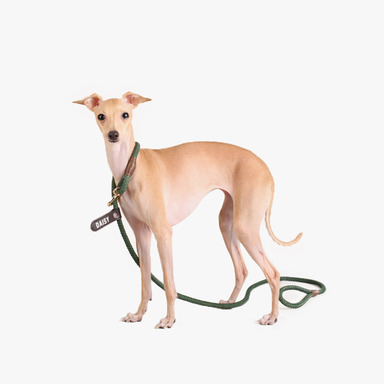 Smartleash Hard Type (Deep Green)