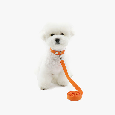 Neck Collar + Lead (Orange)